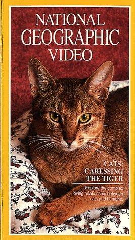 Cats: Caressing The Tiger