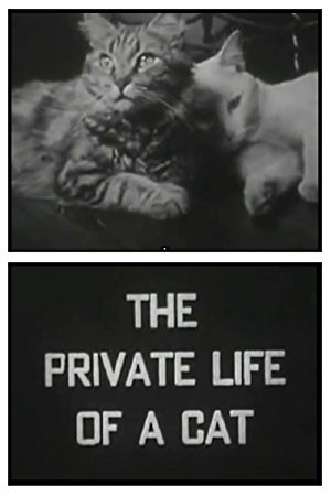 The Private Life Of A Cat