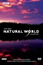 Natural World: Season 35