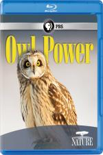 Owl Power